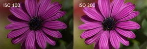 To the left, an under exposed flower shot at ISO 100. To the right, a correct exposure of the same flower when increasing the ISO to 200.