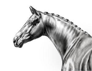 Pferdezeichnung Kunstdruck