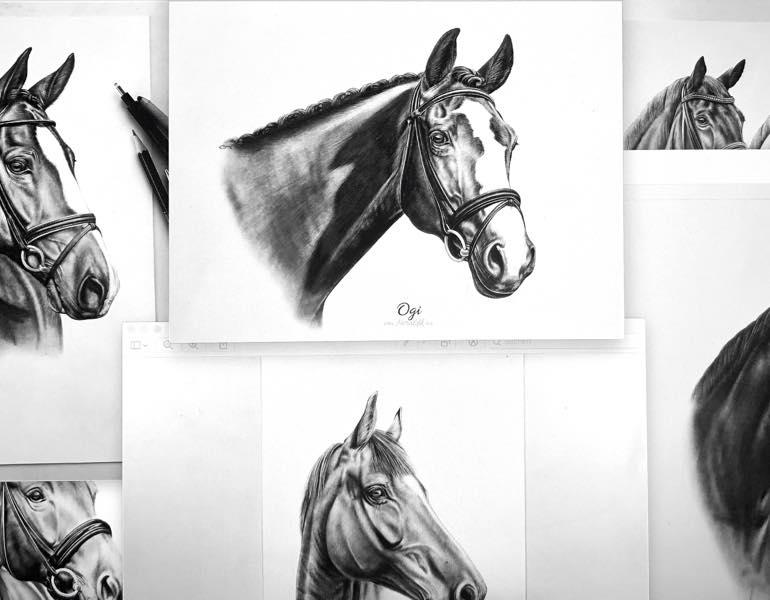 Pferdezeichnungen Auswahl