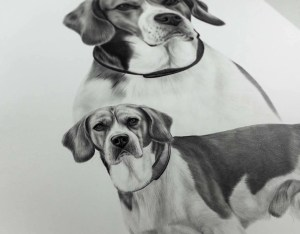 Beagle Zeichnung