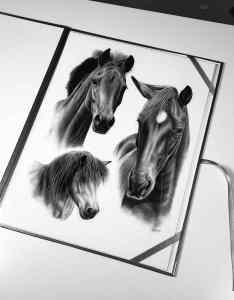 Collage Pferdeportraits