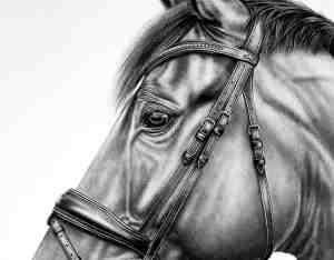 Bleistiftzeichnung Pferd Details Bleistiftzeichnung