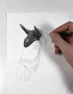 Erstellung einer Pferdezeichnung