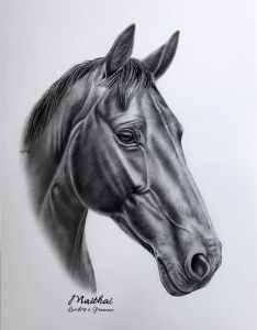 Feine Bleistiftzeichnung Pferd