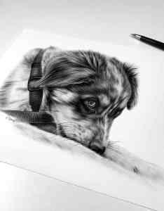 Hund zeichnen lassen