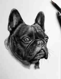 Hundeportrait in Auftrag geben