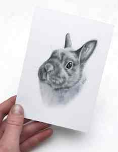 Kaninchen Zeichnung