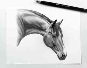 Kleines Pferdeportrait