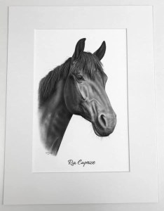 Pferd Bleistift
