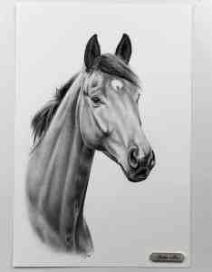 Pferdekopf gezeichnet