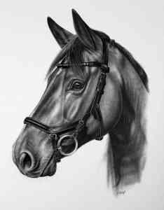 Pferdekopf Micklem