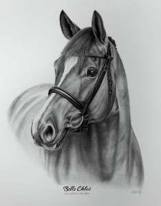 Pferdeportrait Bleistift Zeichnung