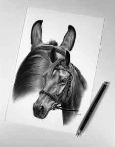 Pferdeportrait Bleistift