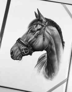 Pferdeportrait schwarz-weiß