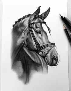 Pferdezeichnung beauftragen