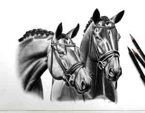 Pferdezeichnung Komposition Köpfe