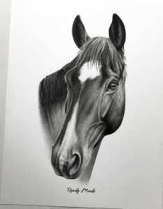 Pferdezeichnung ohne Zaum