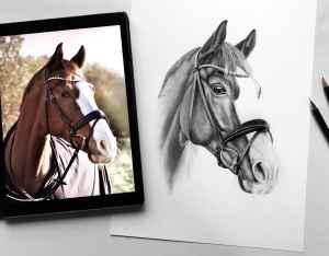 Pferdezeichnung Vergleich Foto