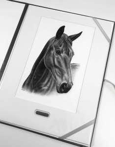Portrait Pferdekopf