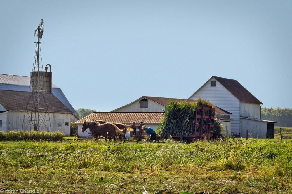 Amish Farm Scenes (2/6)