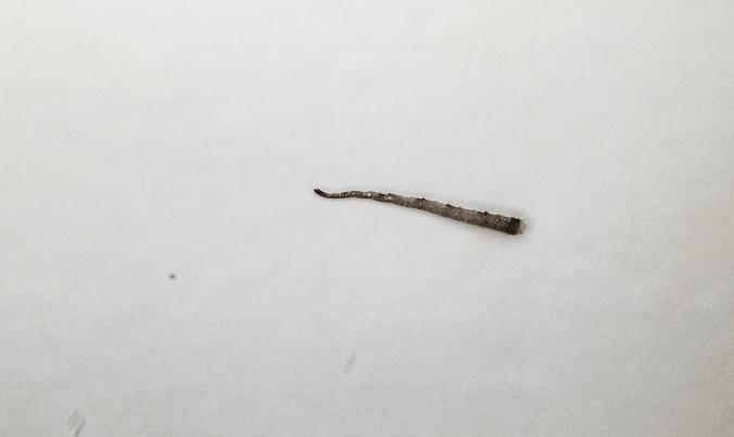 Lizard tail in bath