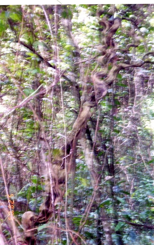 Costa Rica Blurry Trees