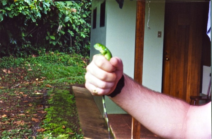 Costa Rica Bigger Lizard