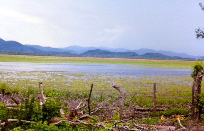 Swampy area in Pale Verde Costa Rica