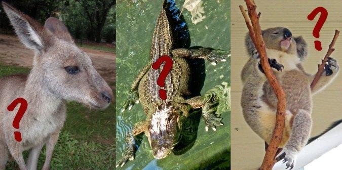 Kangaroo? Crocodile? Koala?