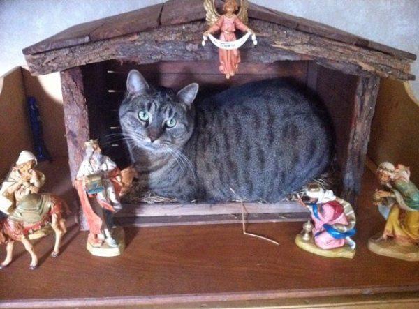 cat_creche
