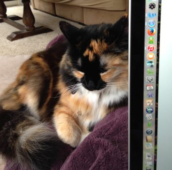 Madeleine, My Cat and Co-editor of Revision