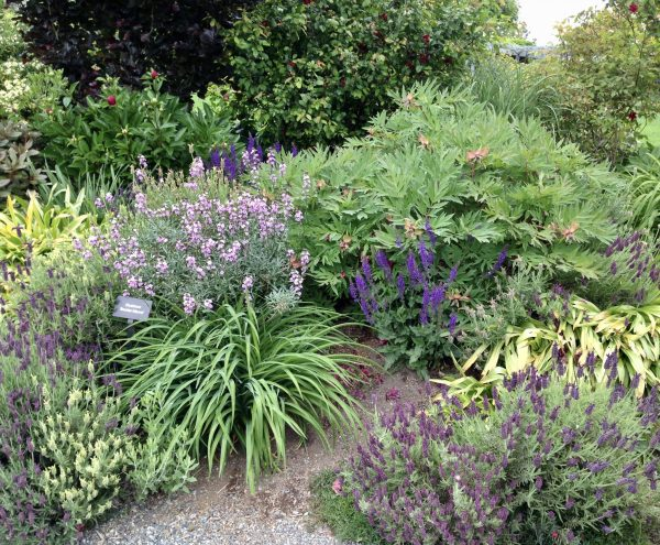Purple Perennials at the Bellevue Botanical Garden, 2018 Seattle Area Gardening Events, Karen Hugg, www.karenhugg.com, #gardening, #plants, #gardentours, #botanicgardens, #plantsales