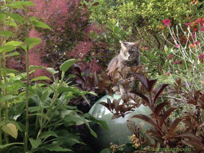 Aleksy the Cat in the Garden, Karen Hugg, https://karenhugg.com/news #gardening #cats #catsinthegarden #summer
