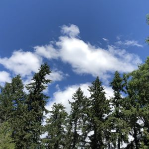 Sky With Trees, Why I Wrote a Novel About a Weird Apple: Part 3, Karen Hugg, https://karenhugg.com/2018/07/06/apple-novel/ #apple #novel #writing #fiction #Kazakhstan #applehistory #HarvestingtheSky