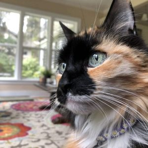 Why I Wrote a Novel About a Tree That Sings: Part Two, Karen Hugg, https://karenhugg.com/2018/11/15/cat, #cats #SongoftheTreeHollow #novel #Seattle #fiction #books