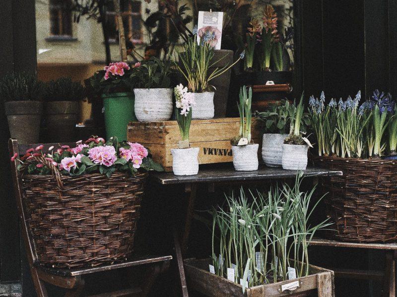 Flower Shop, A Best Friend and a Boss in The Forgetting Flower, Karen Hugg, https://karenhugg.com/2019/05/03/best-friend-boss/ #TheForgettingFlower #books #novels #crimefiction #thrillers #Paris #flowers #plants