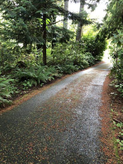 Driveway Woods, A Tormented Gardener in a Garden of Bliss, Karen Hugg, https://karenhugg.com/2019/05/24/garden-of-bliss/, #gardening #plants #garden #KarenHugg #woods