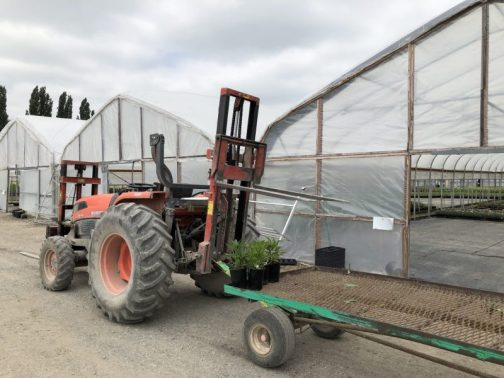 Tractor and Trailer, How I Found New Inspiration at a Familiar Nursery, Karen Hugg, https://karenhugg.com/2019/05/29/nursery #wholesale #plants #nursery #growers #greenhouse #gardening #gardendesign #tractor