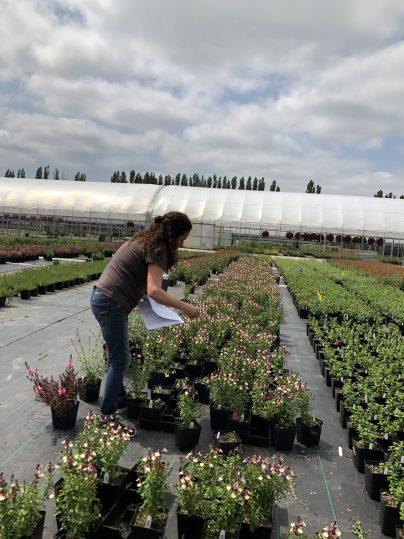 Field at Nursery, How I Found New Inspiration at a Familiar Nursery, Karen Hugg, https://karenhugg.com/2019/05/29/nursery #wholesale #plants #nursery #growers #greenhouse #gardening #gardendesign #field #perennial
