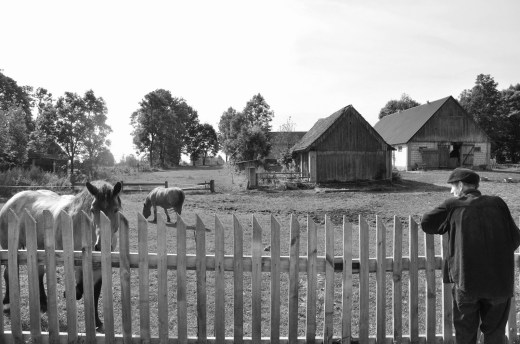 Horses Poland, Where in the World Is The Forgetting Flower T-shirt? Poland, Karen Hugg, https://karenhugg.com/2019/06/13/t-shirt-poland #Poland #Horses #Farm #Rural #UlaDrapala #photography #mediumformat