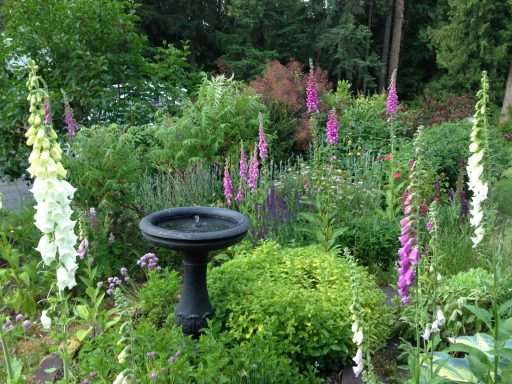 Birdbath Garden, How I Bring Bees, Butterflies, and Birds to My Garden, Karen Hugg, https://karenhugg.com/2019/06/01/bees-butterflies-and-birds #gardening #plants #plantsforsun #bees #butterflies #birds #garden