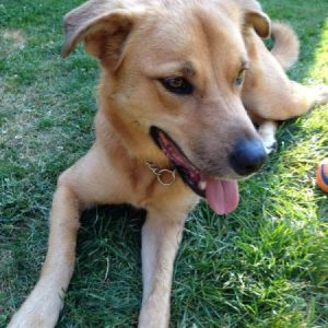 Olive, My Dog, Was My Sweet Puppy Sent by a Dog From Heaven? Karen Hugg, https://karenhugg.com/2019/06/06/dog #dog #pets #Dingo #Olive #Arrow