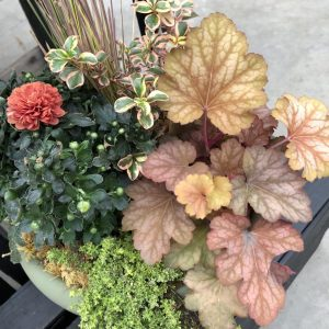 Heuchera in Fall Container, The Rich Blaze of Red and Orange Heucheras, Karen Hugg, https://karenhugg.com/2019/11/01/Red and Orange Heucheras/ #coralbells #heucherapeachflambe #autumn #redandorange #perennials #heucheras #fall #fallcolor #fallcontainer