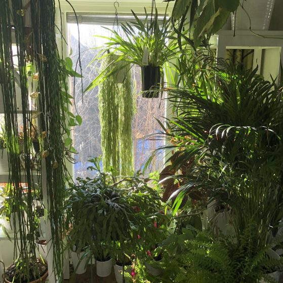 Tommy Tonsberg, How to Grow Amazing Houseplants and an Outstanding Garden in Norway, Karen Hugg, https://karenhugg.com/2020/02/05/how-to-grow-amazing-houseplants-and-an-outstanding-garden-in-norway/ #Norway #gardening #plants #houseplants #Zone7