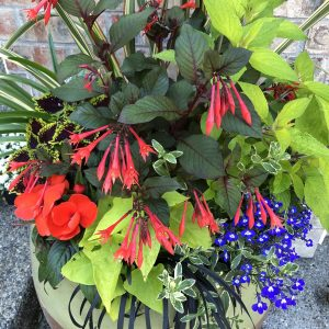 Plants in a container, How to Make a Plant Combination That Pops, https://karenhugg.com/2020/09/14/plant-combination/(opens in a new tab), #plants #container #combination #pops #howto #gardening