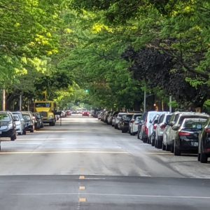 Street With Trees, A Ridiculously Easy Way to Relax With Trees, Daily Stress ReLeaf, Karen Hugg, https://karenhugg.com/2021/02/18/relax-with-trees, #relaxation #stress #trees #fractalpatterns #mentalhealth #plants #nature #city #destressing #walking
