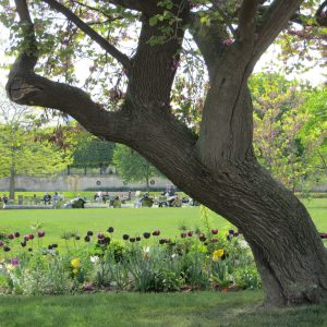 Paris Park in Spring, Three Quick Ways to Lower Stress With Plants This Weekend, Daily Stress ReLeaf, Karen Hugg, https://karenhugg.com/2021/03/05/ways-to-lower-stress-with-plants/, #dailystressreleaf #relaxation #destressing #waystolowerstresswithplants #outside #eucalyptus #springtimeactivity #spring