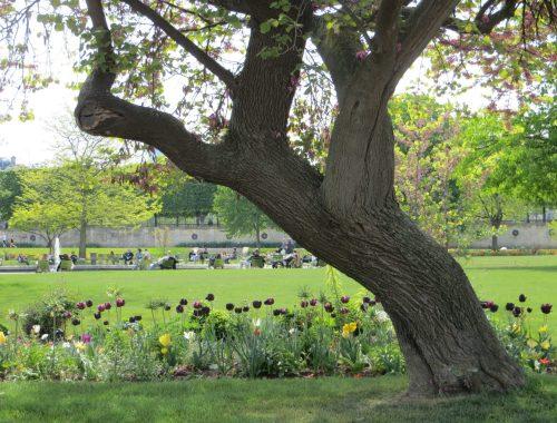 Paris Park in Spring, Three Quick Ways to Lower Stress With Plants This Weekend, Daily Stress ReLeaf, Karen Hugg, https://karenhugg.com/2021/03/05/ways-to-lower-stress-with-plants/, #dailystressreleaf #relaxation #destressing #waystolowerstresswithplants #outside #eucalyptus #springtimeactivity #spring
