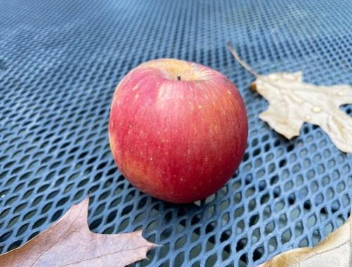 Apple, The Unique Apple in my Novel Began its Controversial Life in Kazakhstan, Karen Hugg, https://karenhugg.com/2021/09/28/kazakhstan-apples/ #apples, #HarvestingtheSky, #appleseason, #funfacts, #books, #magic, #mystery, #thrillers, #Kazakhstan