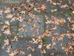Fall Leaves, One Idea to Conquer the Gloomy Monday Blues, https://karenhugg.com/2021/10/25/monday-blues/(opens in a new tab), Karen Hugg, #MondayBlues, #MondayMotivation, #fall, #gloom, #sadness, #depression, #inspiration, #happiness